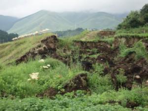 同地区。崩れたまま放置された田んぼの脇に白い彼岸花が時を違えず咲いていた。(9月撮影)