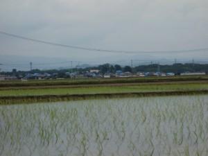 7月田植えされた田んぼも奥にブルーシートをかぶせられた家が連なる